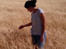 Spiga Negra entre el trigo duro